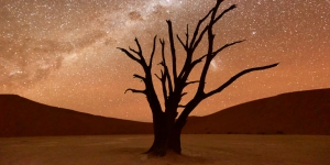 Dead Vlei at dusk in the southern part of the Namib Desert