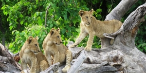 Without visitors Africa's wildife is under increased threat © Judith Wesley, World Journeys