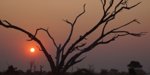 African sunset… Trafalgar has launched tours in South Africa and other parts of the Continent