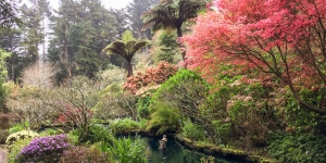 Rhododendrons and azaleas feature in Cross Hills garden in the Manawatu